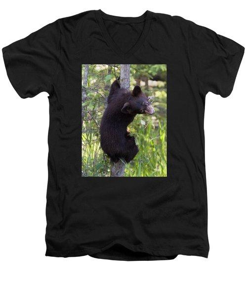 Bear Cub On Tree Men's V-Neck T-Shirt