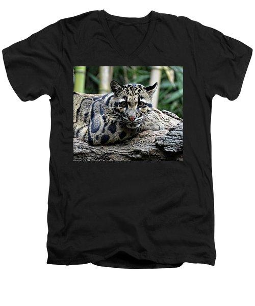Clouded Leopard Beauty Men's V-Neck T-Shirt