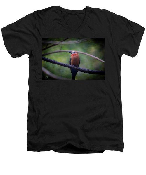 Bee-eater Men's V-Neck T-Shirt