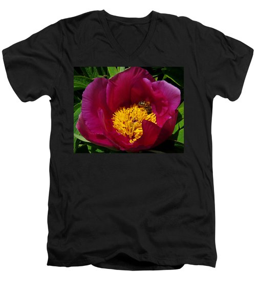 Bee On A Burgundy And Yellow Flower3 Men's V-Neck T-Shirt by John Topman