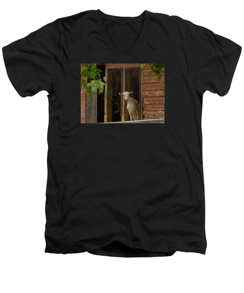 Men's V-Neck T-Shirt featuring the photograph Billy Goat by Dan Traun
