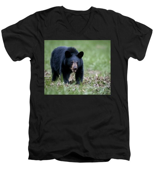 Men's V-Neck T-Shirt featuring the photograph Black Bear by Tyson and Kathy Smith