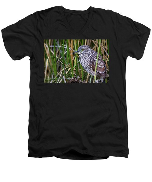 Men's V-Neck T-Shirt featuring the photograph Black-crowned Night Heron  by Vincent Bonafede