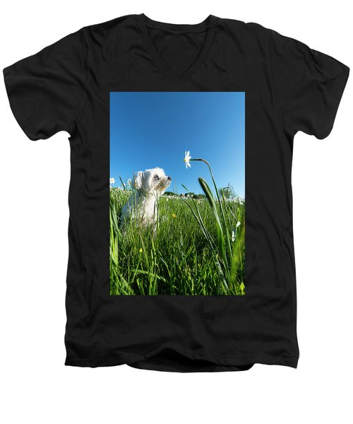 Blooming Daffodils In The Antola Park With Maltese IIi Men's V-Neck T-Shirt