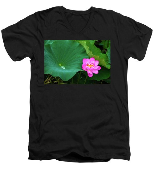 Blooming Pink And Yellow Lotus Lily Men's V-Neck T-Shirt