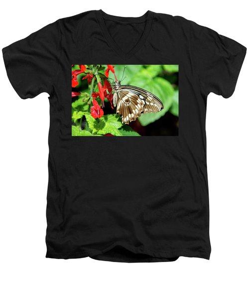 Brown Swallowtail Butterfly Men's V-Neck T-Shirt