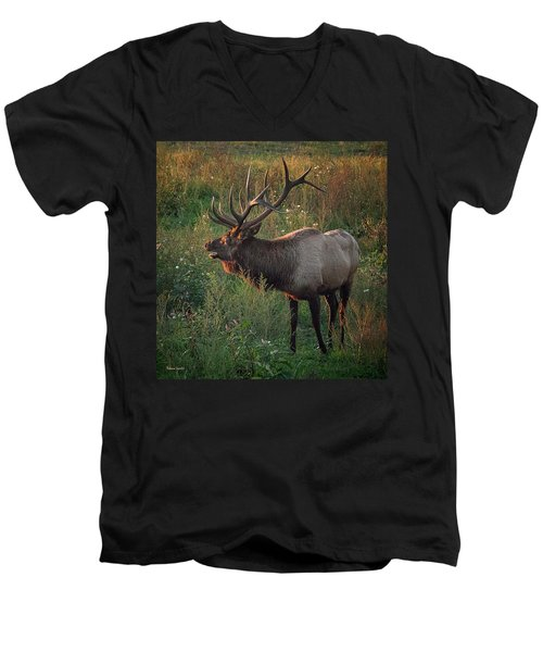 Bull Elk Men's V-Neck T-Shirt