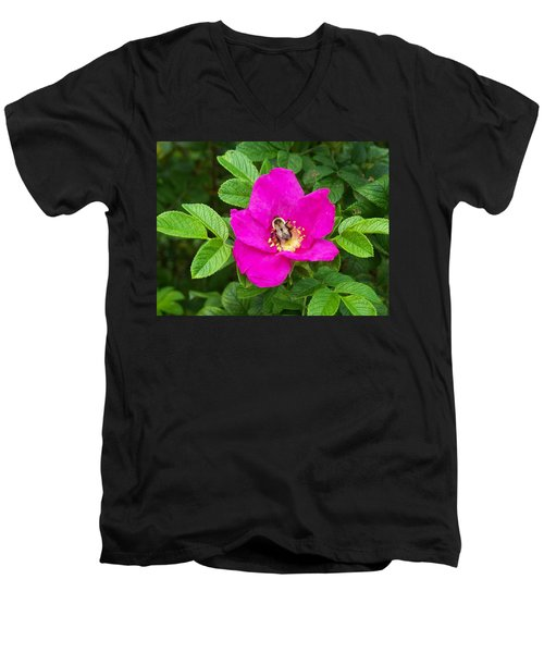 Bumble Bee On A Wild Rose Men's V-Neck T-Shirt by Joy Nichols