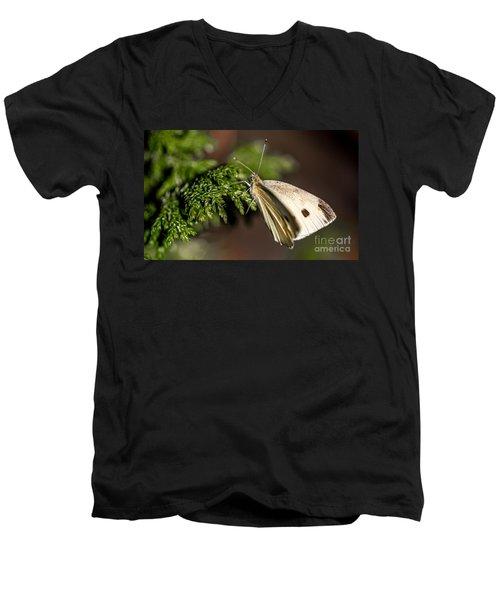 Cabbage Butterfly On Evergreen Bush Men's V-Neck T-Shirt