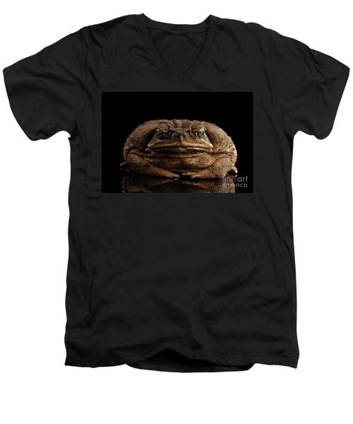 Men's V-Neck T-Shirt featuring the photograph Cane Toad - Bufo Marinus, Giant Neotropical Or Marine Toad Isolated On Black Background, Front View by Sergey Taran