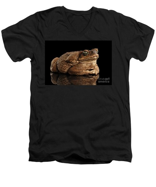 Cane Toad - Bufo Marinus, Giant Neotropical Or Marine Toad Isolated On Black Background Men's V-Neck T-Shirt