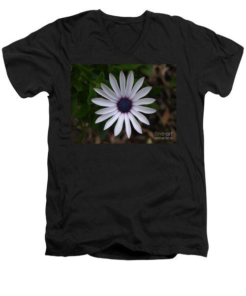 Cape Daisy Men's V-Neck T-Shirt by Richard Brookes