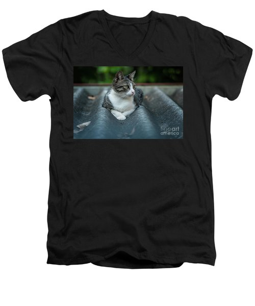 Cat In The Cradle Men's V-Neck T-Shirt