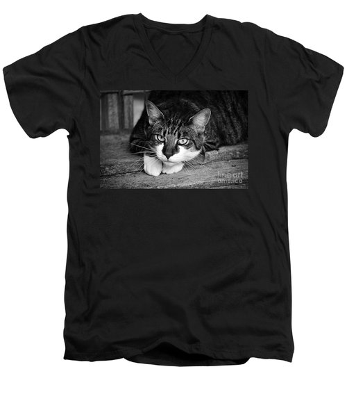 Cat Naps 2 Men's V-Neck T-Shirt