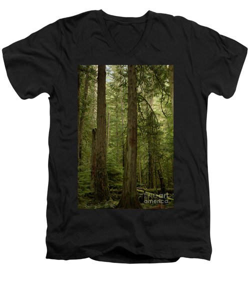 Cathedral Grove Men's V-Neck T-Shirt