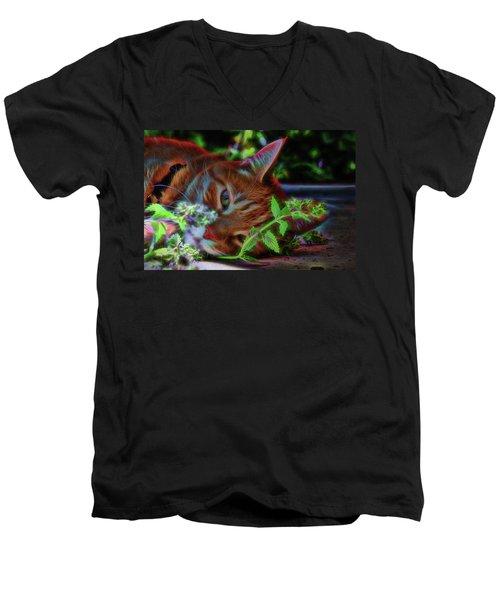 Catnip Chillin Men's V-Neck T-Shirt
