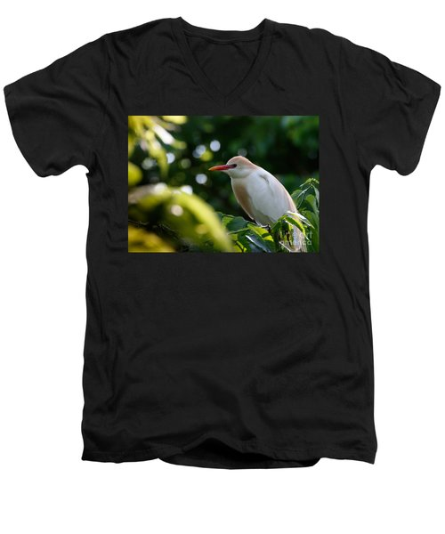 Cattle Egret In Oklahoma Men's V-Neck T-Shirt