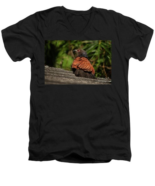 Centropus Sinensis Men's V-Neck T-Shirt