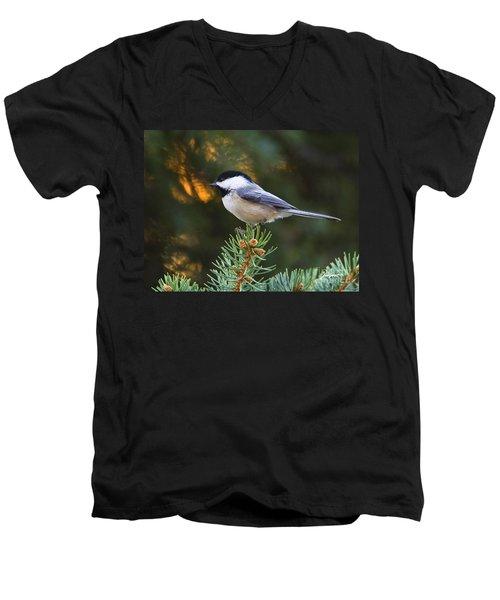 Chickadee In Spruce  Men's V-Neck T-Shirt