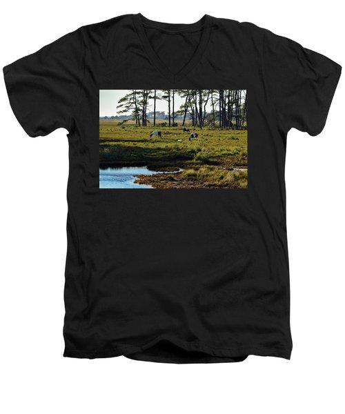 Chincoteague Ponies Men's V-Neck T-Shirt