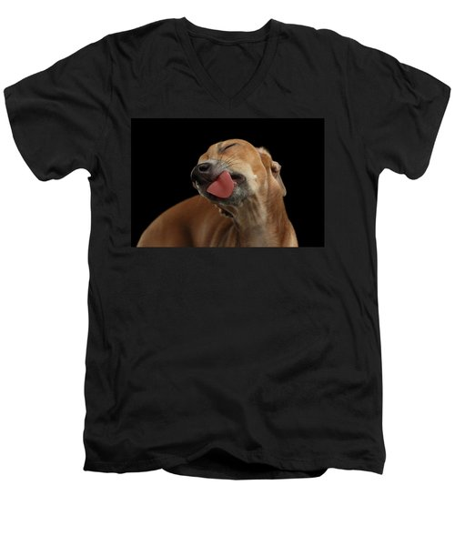 Closeup Cute Italian Greyhound Dog Licked With Pleasure Isolated Black Men's V-Neck T-Shirt by Sergey Taran