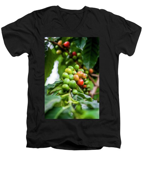 Coffee Plant Men's V-Neck T-Shirt