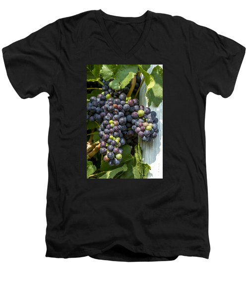 Colorful Wine Grapes On Grapevine Men's V-Neck T-Shirt