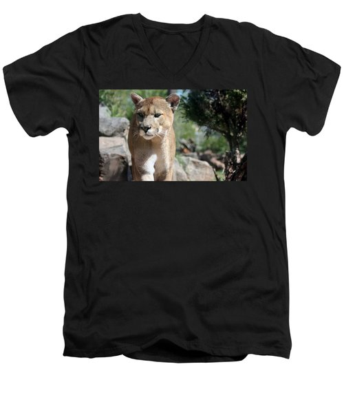 Cougar Men's V-Neck T-Shirt