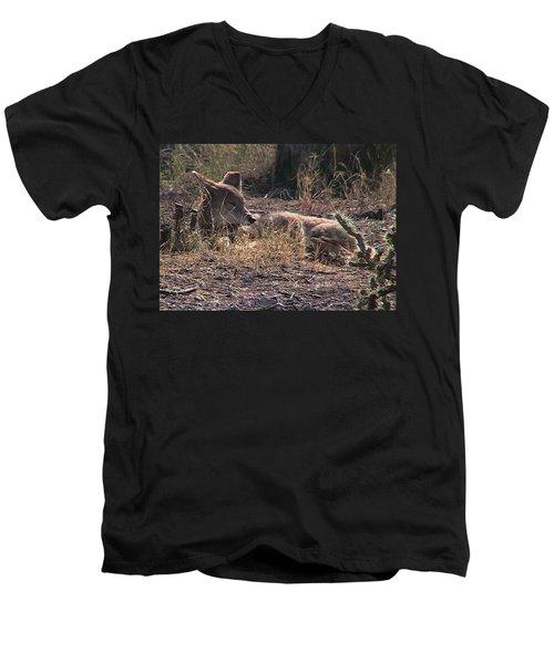 Resting Coyote Men's V-Neck T-Shirt