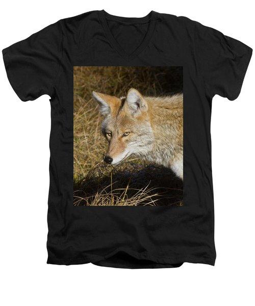 Coyote In The Wild Men's V-Neck T-Shirt