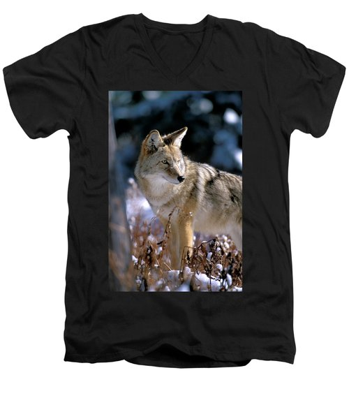 Coyote In Winter Light Men's V-Neck T-Shirt