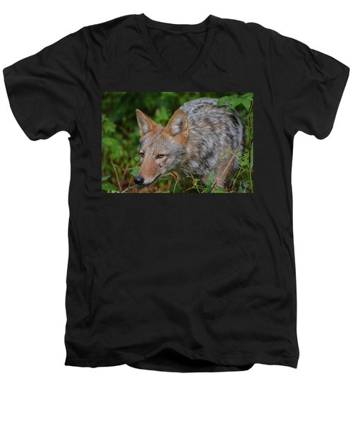 Coyote On The Hunt Men's V-Neck T-Shirt