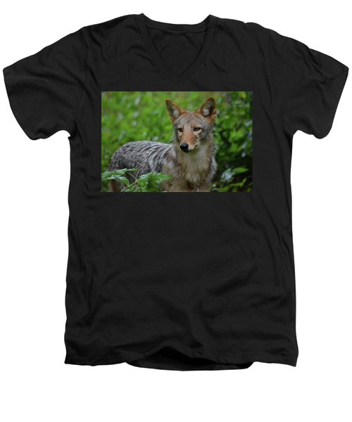 Coyote On The Prowl  Men's V-Neck T-Shirt