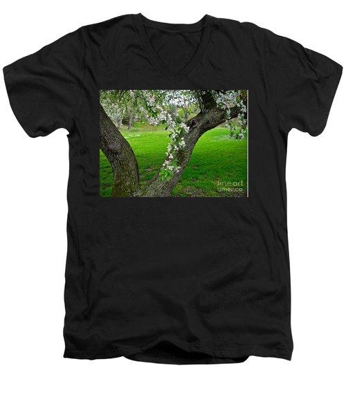 Crabapple Blossoms On A Rainy Spring Day Men's V-Neck T-Shirt