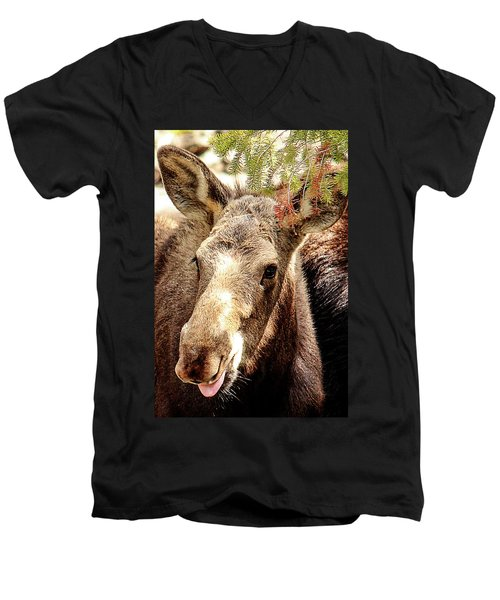 Cutie Moose Men's V-Neck T-Shirt