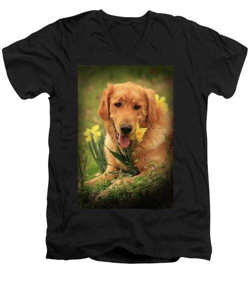 Daffodil Dreams Men's V-Neck T-Shirt