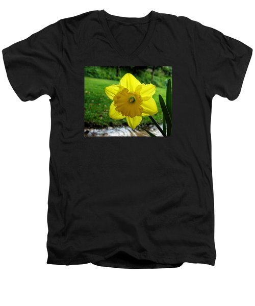 Daffodile In The Rain Men's V-Neck T-Shirt by Dorothy Cunningham