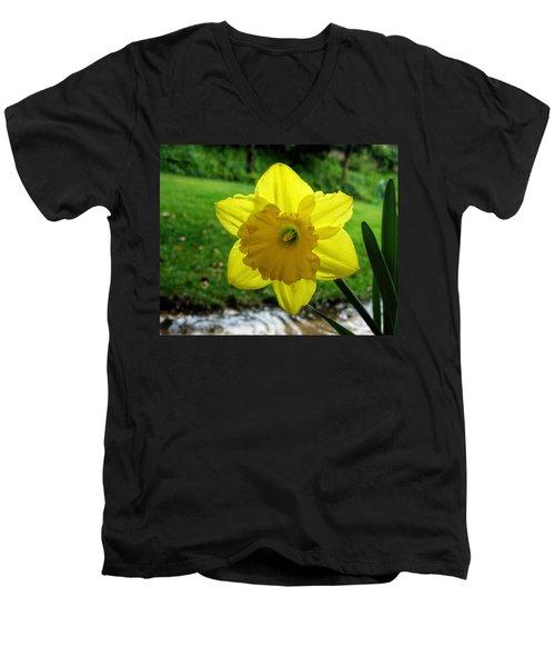 Daffodile In The Rain Men's V-Neck T-Shirt