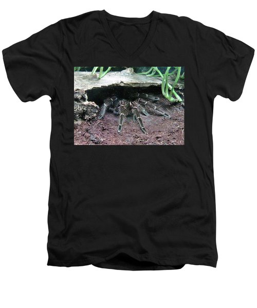 Desert Tarantula Men's V-Neck T-Shirt