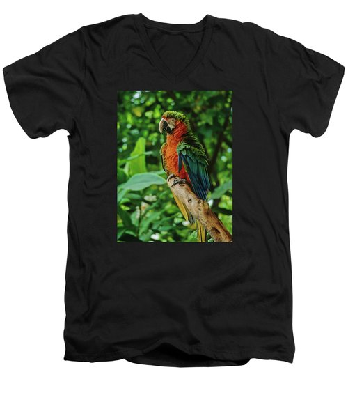 Men's V-Neck T-Shirt featuring the photograph Don't Ruffle My Feathers by Marie Hicks