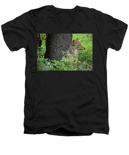 Early Morning Coyote In Maine Men's V-Neck T-Shirt