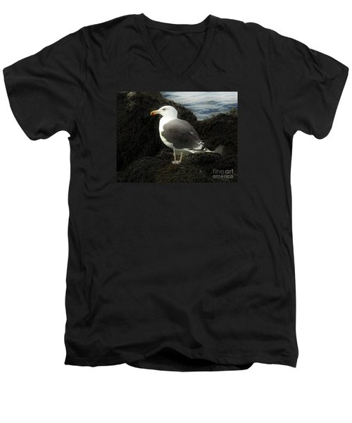 East Coast Herring Seagull Men's V-Neck T-Shirt