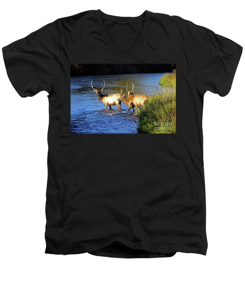 Elk Men's V-Neck T-Shirt by Cindy Murphy - NightVisions