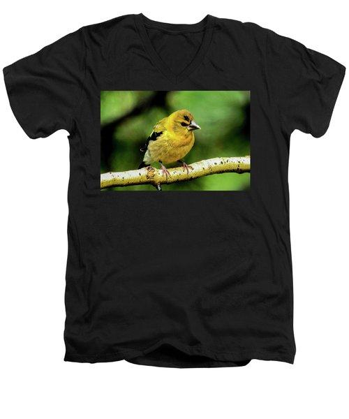 Evening Grosbeak Baby Men's V-Neck T-Shirt by Marilyn Burton