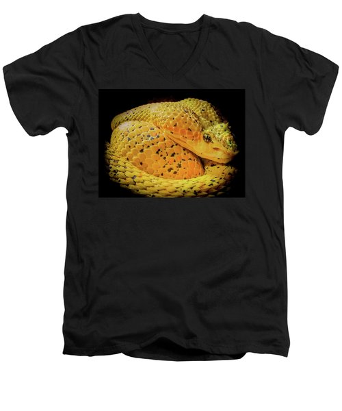 Eyelash Viper Men's V-Neck T-Shirt by Karen Wiles