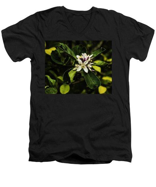 Flower Of The Lemon Tree Men's V-Neck T-Shirt