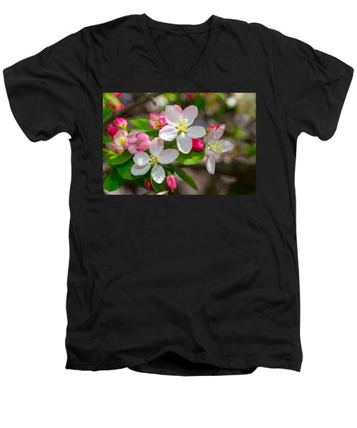 Flowering Cherry Tree Blossoms Men's V-Neck T-Shirt