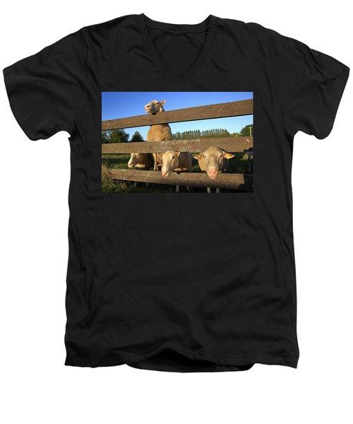Four Sheep At A Fence Men's V-Neck T-Shirt