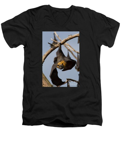 Fruit Bat Hanging Men's V-Neck T-Shirt by Craig Dingle
