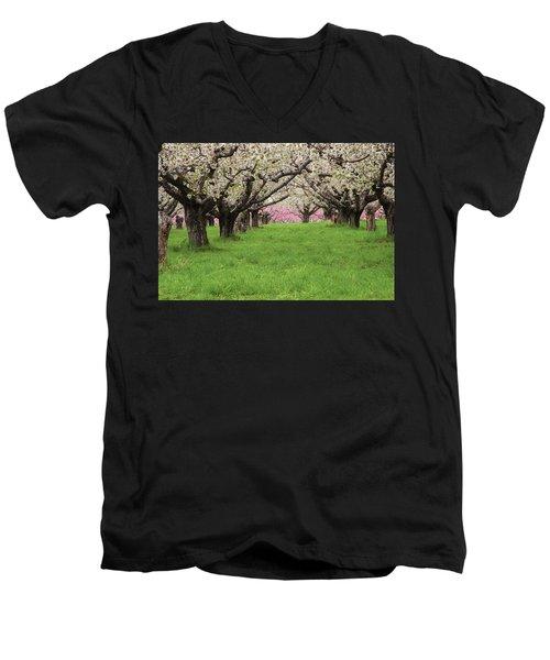 Fruit Orchard Men's V-Neck T-Shirt by Utah Images